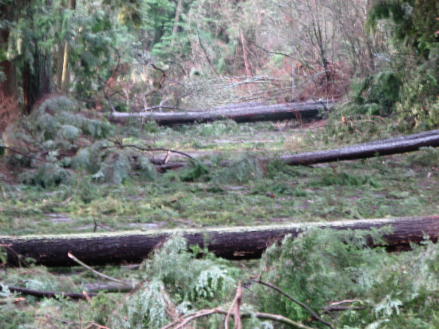 Stanley Park blowdown