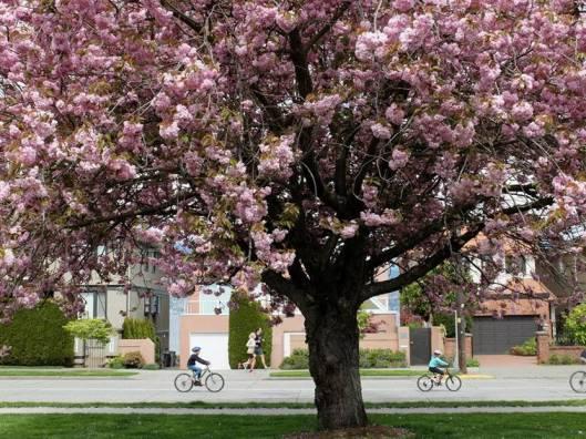 Blossoms PGR 2