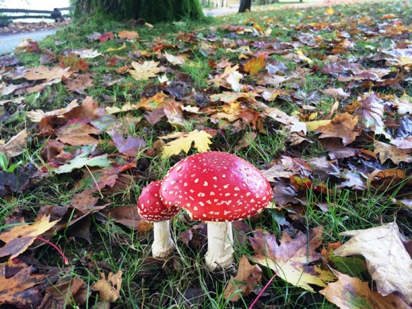 Mushroom (1)