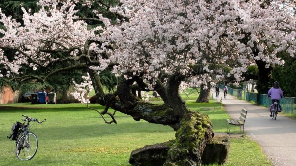 Ohrn - Blossoms2