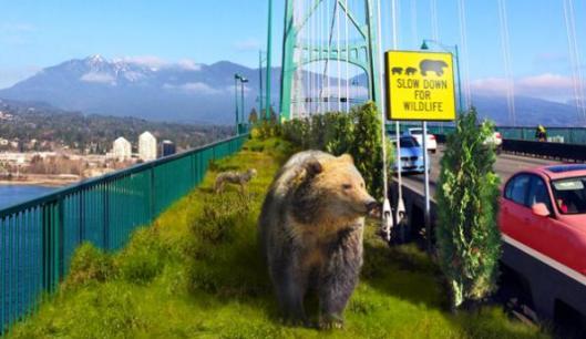 lions-gate-wildlife-corridor-B--horizontal-web