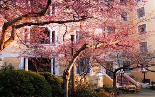 Ohrn Spring 2