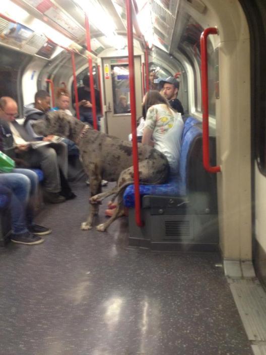 dog-on-the-tube