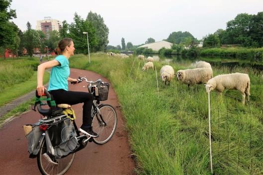 Groningen - Grass (1) (Large)