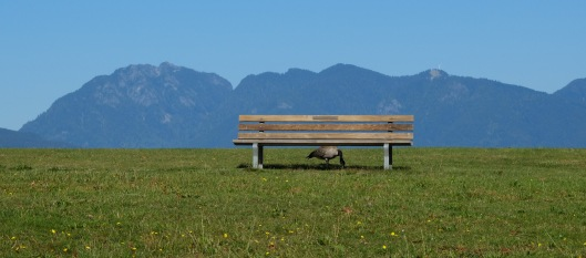 bench-goose-jericho