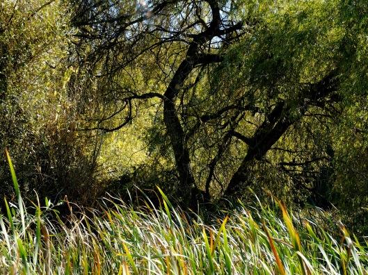 jericho-trees