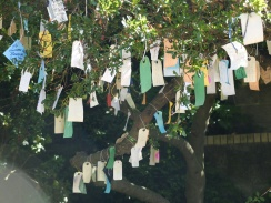 wish-tree-1