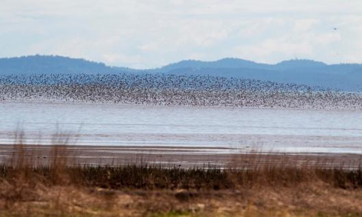 0503-bird-migration-6