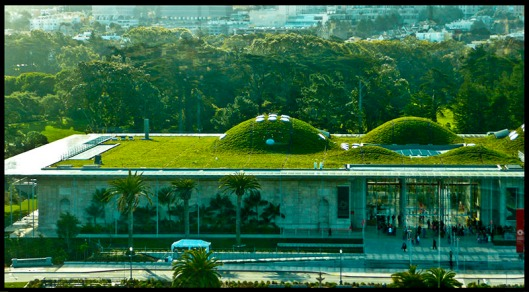 135534d1238294806-greenist-building-san-francisco-grass-roof-green