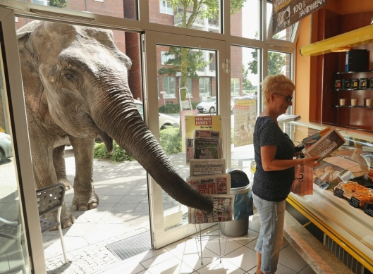 elephant-entering