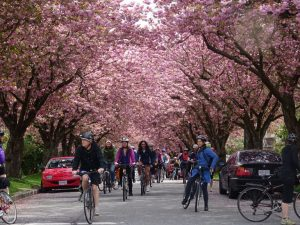Geezer.n.Blossoms